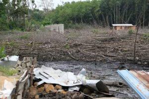 Destruction de la mangrove dans le 5e arrondissement